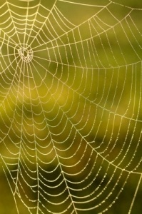 Spider web image for 5 Unique Ways to Get Backlinks to Your Websites