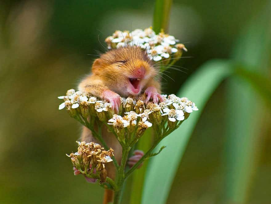 joyful rodent Pictures, Images and Photos